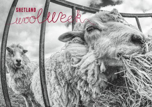 Shetland Wool Week Image